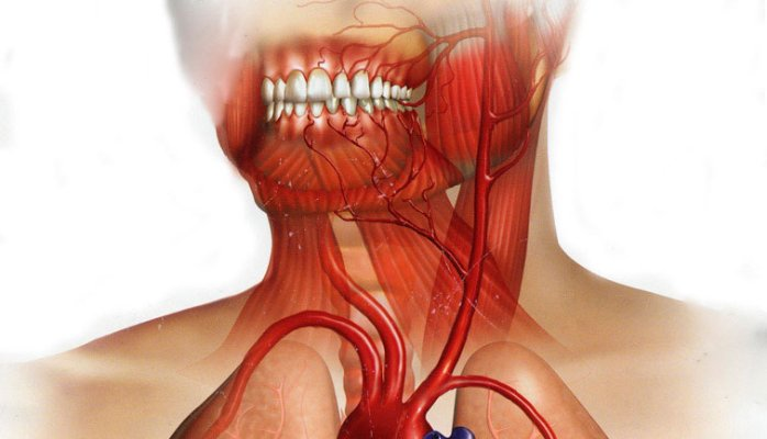 Influence of the Periodontium onCardiovascular Disease